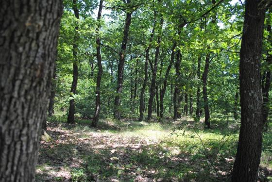 3800 SQ.M. Forest in N. Bulgaria